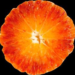arancia-tarocco