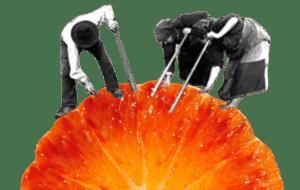 Prodotti bio da agricoltura biologica - Agrumi Scorzamara Azienda Agricola Aranzulla